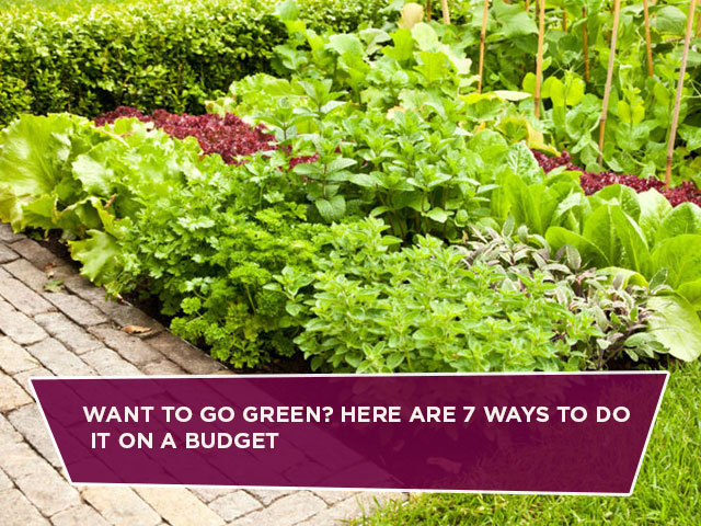 Want To Go Green? Here Are 7 Ways To Do It On A Budget